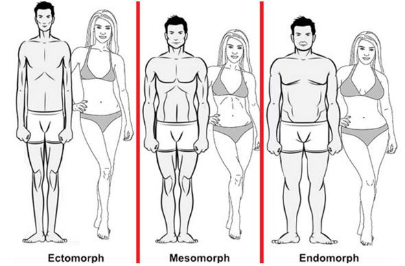 ¿Qué morfotipo eres?